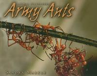 Army Ants - Animal Scavengers (Paperback)