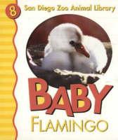 Baby Flamingo (Board book)