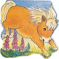 Pony - Amis De Poche (Board book)