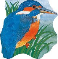 Pocket Kingfisher