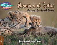 Honey and Toto: The Story of a Cheetah Family 1 Pathfinders - Cambridge Reading Adventures (Paperback)