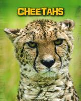 Cheetahs - InfoSearch: Living in the Wild: Big Cats (Paperback)