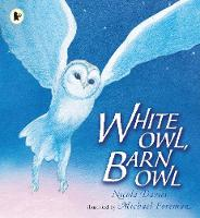White Owl, Barn Owl (Paperback)