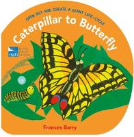Caterpillar to Butterfly: Open Out and Create a Giant Life-Cycle (Hardback)