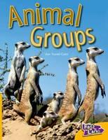 Animal Groups Fast Lane Yellow Non-Fiction (Paperback)