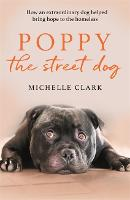 Poppy The Street Dog
