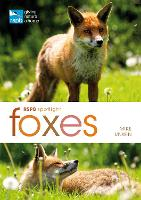 RSPB Spotlight: Foxes (Paperback)