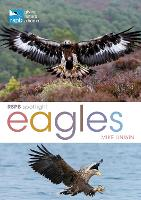 RSPB Spotlight: Eagles - RSPB (Paperback)