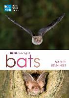 RSPB Spotlight Bats