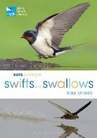 RSPB Spotlight Swifts and Swallows (Paperback)