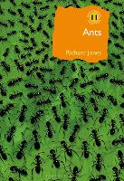 Ants: The ultimate social insects - British Wildlife Collection (Hardback)