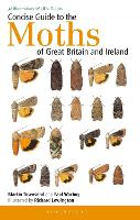 Concise Guide to the Moths of Great Britain and Ireland - Field Guides (Paperback)