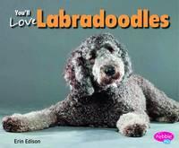 You'll Love Labradoodles - Designer Dogs (Paperback)