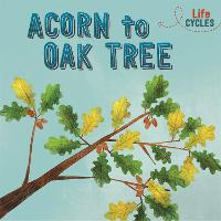 Life Cycles: Acorn to Oak Tree - Life Cycles (Paperback)