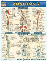 Anatomy 2 - Reference Guide (8.5 x 11): a QuickStudy Reference Tool