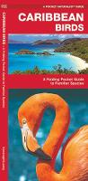 Caribbean Birds: A Folding Pocket Guide to Familiar Species - Pocket Naturalist Guide Series