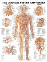 Vascular System and Viscera Anatomical Chart (Wallchart)