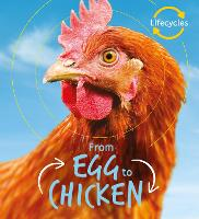 Lifecycles: Egg to Chicken - LifeCycles (Paperback)