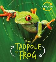 Lifecycles: Tadpole to Frog - LifeCycles (Paperback)