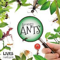 Amazing Ants - The Lives of Minibeasts (Hardback)