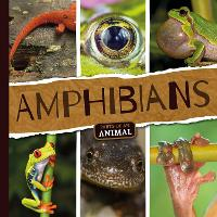 Amphibians - Parts of an Animal (Hardback)
