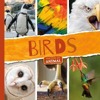 Birds - Parts of an Animal (Paperback)