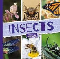 Insects - Parts of an Animal (Hardback)