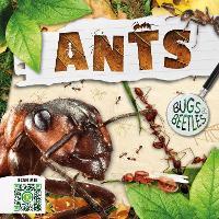 Ants - Bugs and Beetles (Hardback)