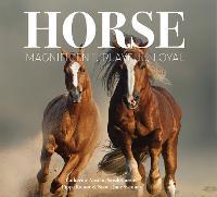 Horse: Magnificent, Playful, Loyal - Best Kept Secrets (Hardback)