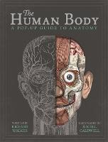 The Human Body: A Pop-Up Guide to Anatomy (Hardback)