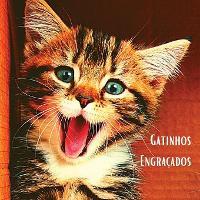 Gatinhos Engracados: Album de fotografias a cores com belos gatinhos. Ideia de prenda para os amantes de gatos pequenos e da natureza. Livro fotografico com retratos em grande plano de gatinhos que descobrem o mundo. (Paperback)