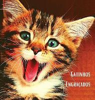 Gatinhos Engracados: Album de fotografias a cores com belos gatinhos. Ideia de prenda para os amantes de gatos pequenos e da natureza. Livro fotografico com retratos em grande plano de gatinhos que descobrem o mundo. (Hardback)