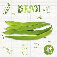 Bean - Life Cycles (Paperback)