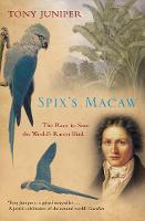 Spix's Macaw: The Race to Save the World's Rarest Bird (Paperback)