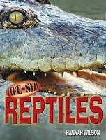 Life-Size Reptiles - Life Size Series (Hardback)