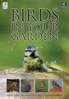 Birds in Your Garden (Paperback)