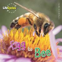 Life Cycles: Egg to Bee (Paperback)