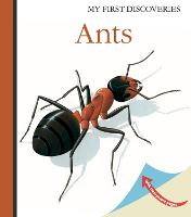 Ants - My First Discoveries (Hardback)