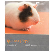 Guinea Pig - Pet Friendly