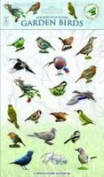 Garden Birds - Sticker Play Scenes 1