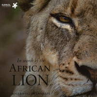 In Search of the African Lion (Hardback)