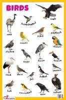 Birds Educational Chart (Poster)
