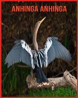 Anhinga anhinga: Immagini bellissime e fatti interessanti Libro per bambini sui Anhinga anhinga (Paperback)