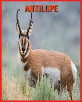 Antilope: Immagini bellissime e fatti interessanti Libro per bambini sui Antilope (Paperback)