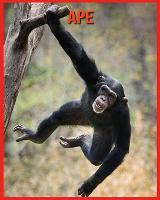 Ape: Immagini bellissime e fatti interessanti Libro per bambini sui Ape (Paperback)