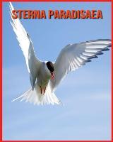 Sterna Paradisaea: Immagini bellissime e fatti interessanti Libro per bambini sui Sterna Paradisaea (Paperback)