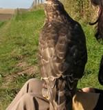 H is for Hawk wins Samuel Johnson Prize