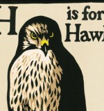 Costa Book of the Year Nominee: H is for Hawk by Helen Macdonald