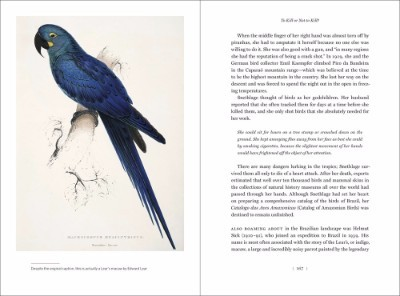 Birdmania: A Remarkable Passion for Birds (Hardback)