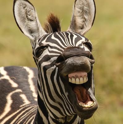 Comedy Wildlife Photography Awards (Hardback)